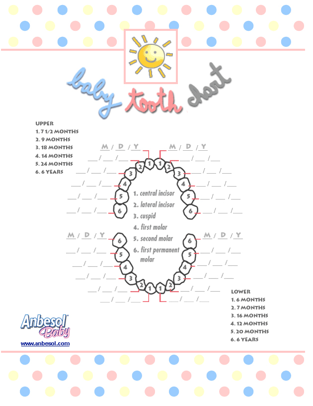 This is a picture of Influential Baby Teeth Chart Printable